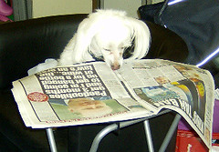 Reading her Daily Record (petchamp2008) Tags: dog pet pets look animal animals cat scotland looking champion adorable competition daily best cash funniest record prize unusual 2008 cutest alike champ lookalike dailyrecord scotlands bestlooking petchamp2008 petchampcouk
