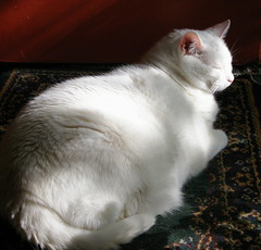 Happy Furry Friday (Gail S) Tags: cat thepuss catsandwindows
