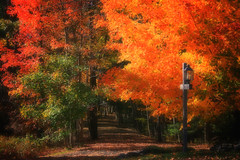 Colors of New England (ddk4runner) Tags: autumn trees copyright color fall nature public book newengland nh soe allrightsreserved blurb ddk4runner theunforgettablepictures goldstaraward copyrightdonnakerley donnakerley donnakerley ddkstudio ddk4runner