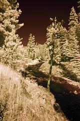 More's Creek in Infrared (aeschylus18917) Tags: red sky lake tree nature forest river landscape ir woods nikon scenery desert d70 nikond70 surreal reservoir idaho boise infrared nikkor infra 1870mm f3545g 1870 highway21 boiseriver  1870f3545g morescreek arrowrockreservoir  nikkor1870f3545g danielruyle douglsfir aeschylus18917 danruyle druyle   nikkor1870f3545gdx