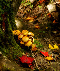 Mushrooms in a really autumnal landscape (Mack2) Tags: red green fall mushroom leaves yellow closeup leaf september vignette svamp gul hst rd grn nrbild lv utumn sonya100 colorphotoaward superaplus aplusphoto ediblefungus
