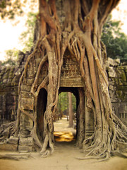 angkor wat cambodia (alejoooo) Tags: wood old travel brown sun tree stone mystery forest temple ancient gate holidays asia cambodia afternoon khmer ruin roots dry sunny angkorwat jungle shade southeast hindu hinduism siamreap 12thcentury kambotscha ingravings