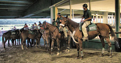 Horses (nyperson) Tags: belmont horseracing