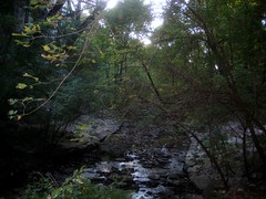Summerhill Ravine (Matthew Burpee) Tags: toronto favorites ravine summerhill