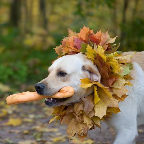Собака с палкой