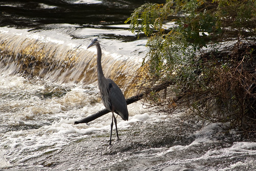 Bleachery Dam, Waltham, MA