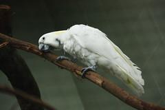 Parrot 鸚鵡 (air maxx) Tags: china desktop wallpaper hk bird animals japan farm parrot hong kong fans