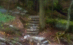 Forest-Stairs (Photokayaker1) Tags: zoneplate digitalphotograph