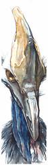 this is not a pterodactyl...... (Jennifer Kraska) Tags: art pen watercolor jennifer cassowary ballpoint kraska