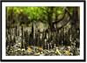 Mangrove root's (Z.Faisal) Tags: green nature station river nikon mangrove nikkor root bangladesh bangla faisal desh d300 zamir khulna sundarban zamiruddin zamiruddinfaisal kalagachi kholpetua kalagachistation kholpetuariver zfaisal set240711