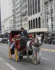 Central Park Carriage & Rosie (Jill Clardy) Tags: park new york city nyc red horse mare carriage cab rosie rita central 100views salisbury 500views buggy retired hansom
