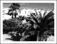 Like Paradise (petitillusion) Tags: africa trees sea summer bw beach spain sand travels holidays morocco mybirthday mediterraneansea ceuta