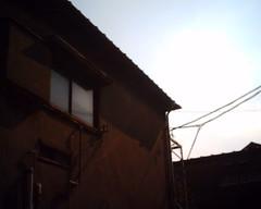 【写真】Sunlight (VQ1005)