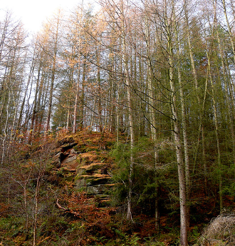 Birch and crag 15Nov08