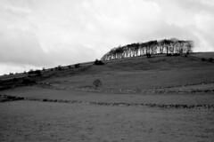 Woo Dale, Peak District (jiggott) Tags: buxton peakdistrict hill tress
