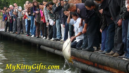 Hello Kitty's View of Big Fish Catch by Talented Fisherman at West Lake, HangZhou