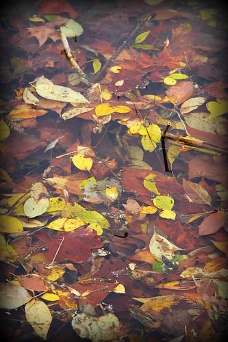 leaves/water