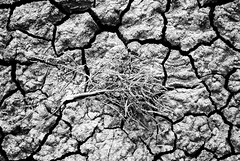 cracked (peterlfrench) Tags: blackandwhite bw nature texas natural dry ground soil dirt marsh swanlake terra cracked southtexas uncolored texascoast 3836