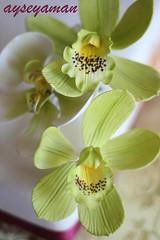 Sugar orchids - Şekerden Yeşil Orkideler