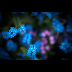 ∞ Floral 3 (Ordinary_Folk) Tags: city blue digital four minolta bokeh chinese systems olympus 55mm e oxford f18 alternative e30 43 thirds rokkor