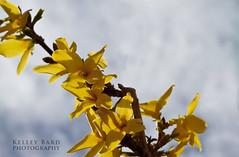 Flowering Branch Against Sky