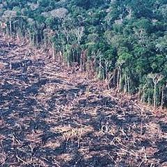 巴西熱帶雨林遭到砍伐的景像。圖片節錄自:英國衛報報導。