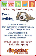 What Dog Breed are You? The Dog Breed Personal...