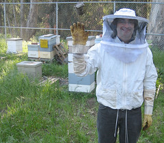 john the beekeeper and his bees in golden gate...