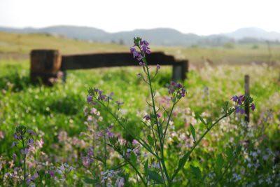 wildflowers around the bend2