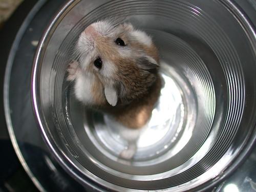 Tic + idea of a diet = AHHHHH! by roborovski hamsters.