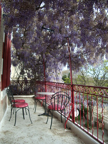 Wisteria at Chateau Ventenac