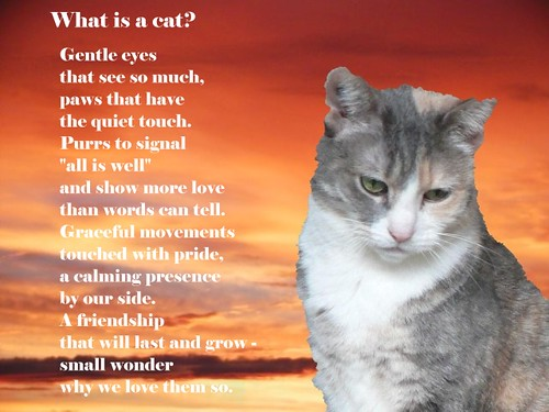 """What is a cat?"" poster 1"