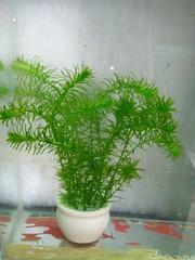 Thủy Sinh Tuấn Anh-Chuyên cây & Rêu Thủy Sinh, Cá Cảnh Biền & Hồ Cá Cảnh Biển - 33