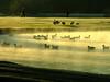 22 patinhos na lagoa (raquelsantana) Tags: curitiba frio geada parquebarigui mywinners