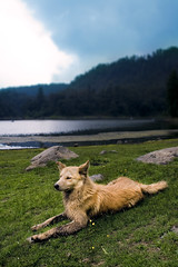 A dog's life is not so bad (Luis Montemayor) Tags: trees sky dog lake mountains grass clouds mexico lago arboles perro pasto cielo nubes resting laguna myfavs montaas descansando zempoala lagunasdezempoala