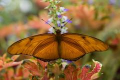 Enchanted (sabrina.ko) Tags: sanfrancisco flowers butterfly conservatory aplusphoto isawyoufirst platinumheartaward goldstaraward theenchantedcarousel