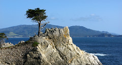 Lone Cypress (anadelmann) Tags: california ca old usa canon landscape pacific alt pebblebeach lonecypress 17miledrive cypress pacificgrove landschaft pictureperfect canonpowershot pazifik naturesfinest zypresse v1000 g9 abigfave f2549 platinumphoto theunforgettablepictures canonpowershotg9 absolutelystunningscapes anadelmann nxpl