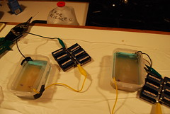 The completed boxes with buffer and gel about 30 minutes into the run using 54 volts (6 9-volts in series).  You can see the cathodes undergoing some redox reaction, leaking copper ions everywhere.