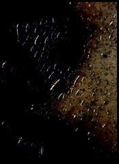 Veneno para Soar 1 (- tsumi -) Tags: water agua colours colores sueos dreams poison veneno tsumi trashbit