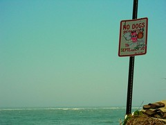City To Shore (Ray Skwire) Tags: streetart beach newjersey stickers nj bob dash shore jerseyshore usualsuspects southjersey bobwillreign eltoro mildred strathmere bwr ticky kazam billikid ceito dezoe