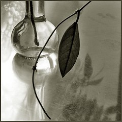 one (me*voilà) Tags: glass lines reflections leaf still vase inmykitchen 500x500 imagepoetry fivestarsgallery artlibre megashot bw500 500x500c47