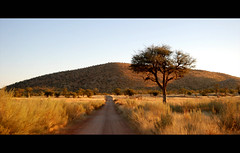 Hobatere (It's Stefan) Tags: africa road morning light naturaleza tree nature grass rural sunrise landscape arbol warm mood view camino farm hill natur  scenic beautifullight peaceful idyll namibia baum atmospheric stimmung lonelytree  warmcolours morgenstimmung kunene twtmeiconoftheday hobatere  stefanhoechst stefanhchst afrikenner2012nominee