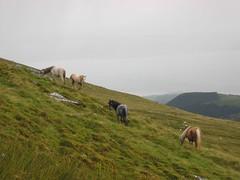 Ponies: Llwytmor