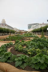Urban garden, San Francisco