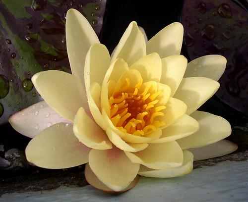 Çiçek Resimleri.