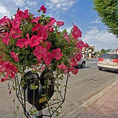 Flowery Parking Meter