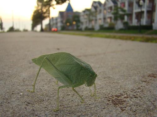 Leaf Walker