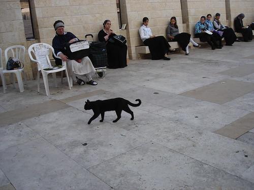 Kitty at the Kotel. צילום: RahelSharon, flickr