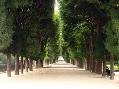 Jardin des Plantes (doc(q)man) Tags: park trees paris green vanishingpoint lane docman inarow jardindesplantes