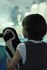 DSC_1832.jpg (jengay (Jenny)) Tags: children penguin yah tnaquarium studio414 studio414jenfavs